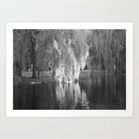 Willows  Art Print