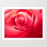 Rose Love Art Print