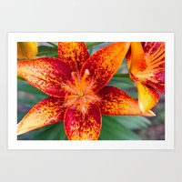 Red & Orange Art Print