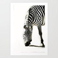 Zebra - Paint Art Print