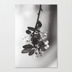 spring sprung Canvas Print