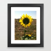 Light Through The Sunflo… Framed Art Print