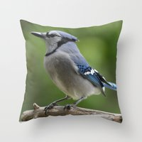 A Northern Blue Jay Throw Pillow
