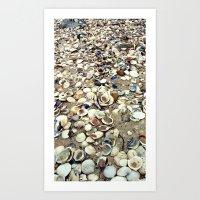 Scattered Shells Art Print