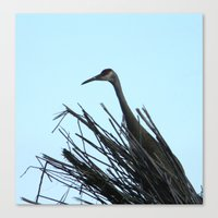 Crane Hiding Canvas Print