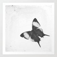 Lepidoptera Art Print