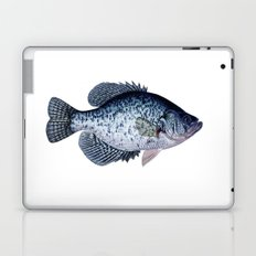 black crappie Laptop & iPad Skin