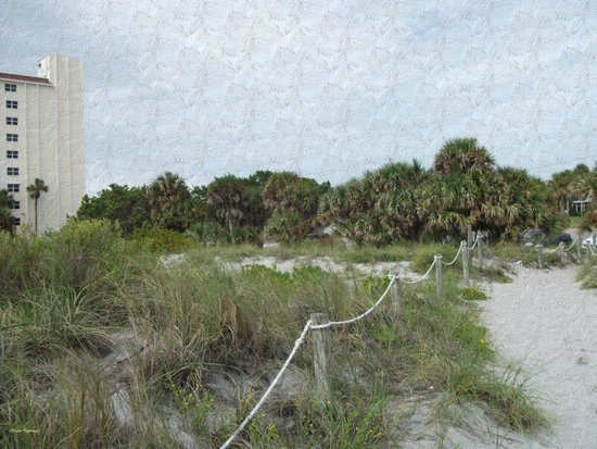 Siesta Keys Beach Trail in Blue Spruce Texture Art Print