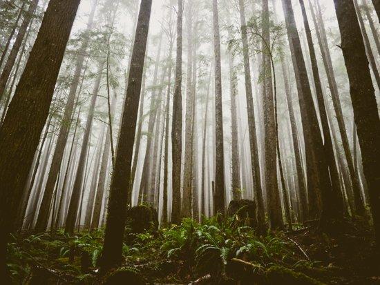 Rainforest of the Pacific Northwest Art Print