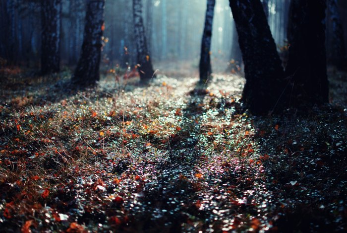 Forest Floor Art Print by Erik Witsoe Photography | Society6