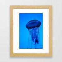 Jelly in the Blue Framed Art Print