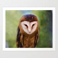 Art Print featuring  Barn Owl  by Svetlana Korneliuk