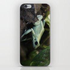 Mint Terribilis Poison Dart Frog iPhone & iPod Skin