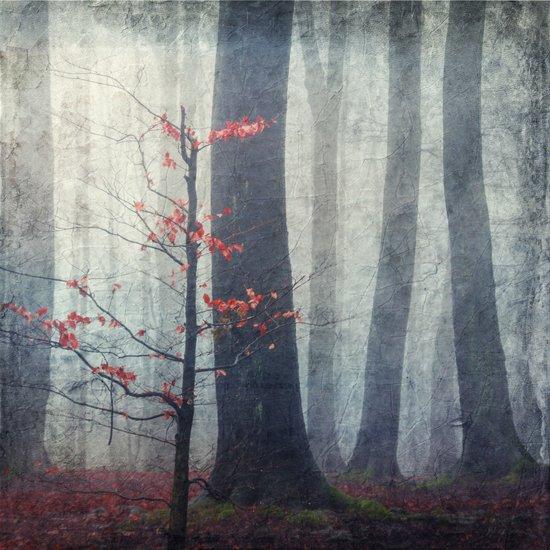 Last Red Leaves Art Print