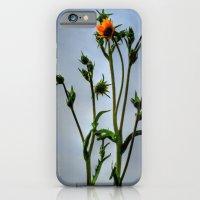 Compass Plant iPhone 6 Slim Case