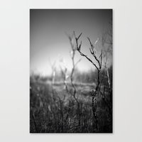 Standing Alone. Canvas Print