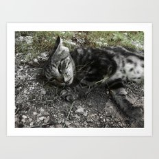 Wild cat Art Print