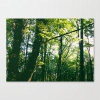 Start of Fall Canvas Print