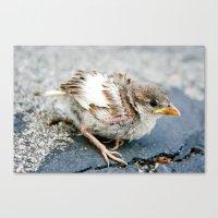 Little Finch Canvas Print