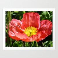 Red Poppy I Art Print