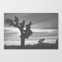 Joshua Tree Silhouettes Canvas Print