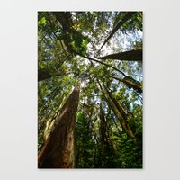 Hawaii Woods Canvas Print