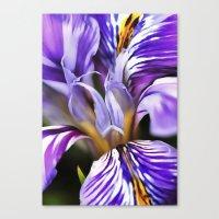 Iris Canvas Print