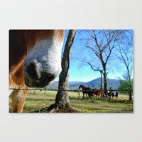 Tennessee nose Canvas Print
