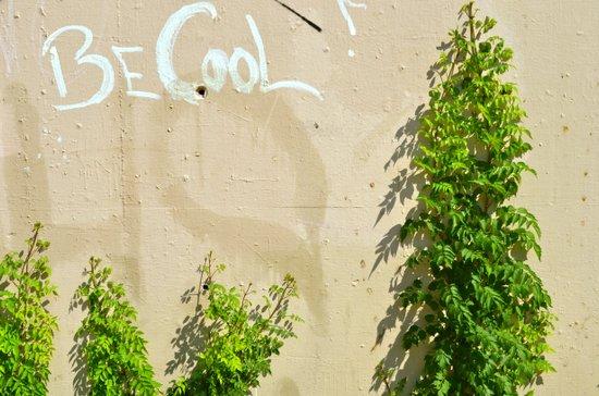 Be Cool! Art Print
