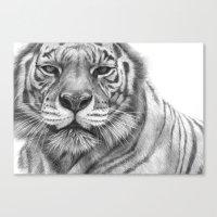 White Tigress  G2013-071 Canvas Print