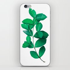 Green Leaves in White background iPhone & iPod Skin