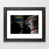 Sophie the French Bulldog Framed Art Print