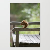 Red Squirrel Snack Time Canvas Print