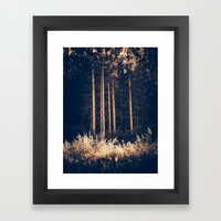 Tall Birches Framed Art Print