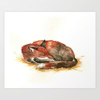 Sleeping Fox Watercolor Art Print