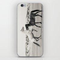 Wild Horses 5 - Black and White iPhone & iPod Skin