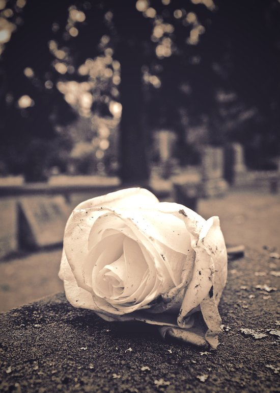 Graveyard rose Art Print