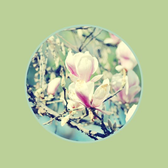 Delicate Nature Art Print
