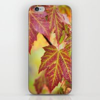 Maple Leaves iPhone & iPod Skin