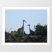 Sandhill Crane pair Art Print