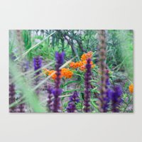 Between The Purples And … Canvas Print