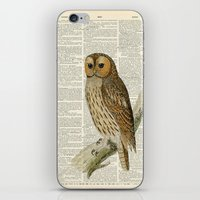 Woodland Owl On Branch iPhone & iPod Skin