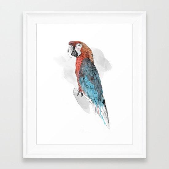 Cuban Macaw Framed Art Print