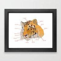 Tiger Colors Framed Art Print