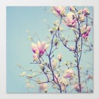Sweet Magnolia 2 Canvas Print
