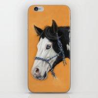 American Paint Horse -  … iPhone & iPod Skin