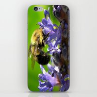 Bee All You Can Bee iPhone & iPod Skin