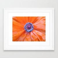 Poppy 2 Framed Art Print