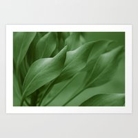 King Sugar Bush - King Protea - Leaves Green Art Print