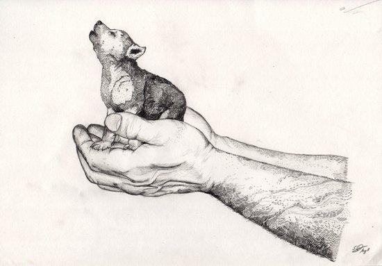 Wolf Cub // Graphite Canvas Print